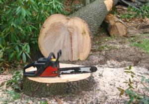 Încă un control la Sâmbăta de Sus, încă o amendă și lemn confiscat