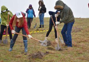 Mii de voluntari au împădurit 27 de hectare cu o sută de mii de puieți