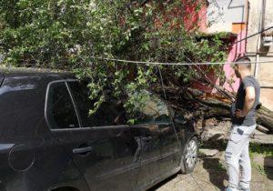 FOTO | Copac prăbușit pe mașina unui făgărășean