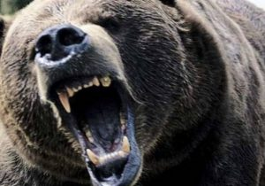 RO-ALERT: Bărbat atacat de urs, la Comăna de Sus